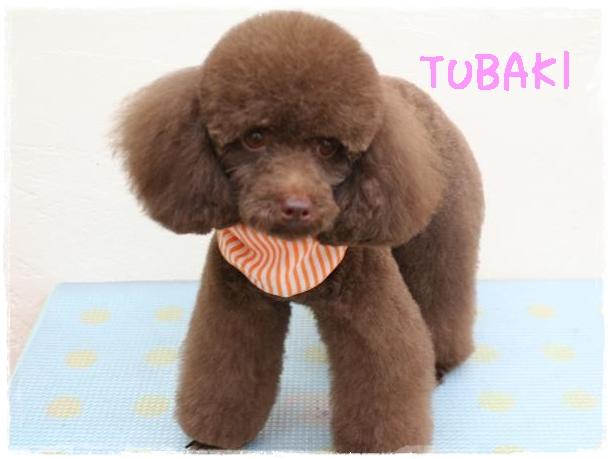 tubaki8_20120130144929.jpg