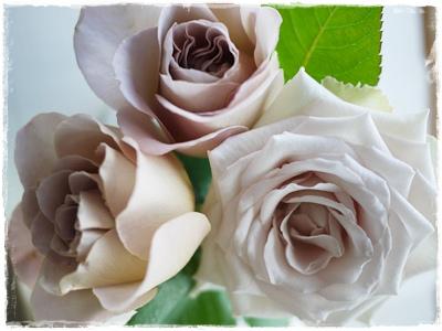 anflower2.jpg