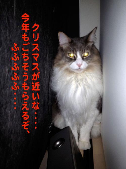 maron1110.jpg