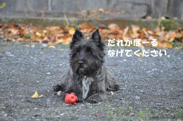 DSC_0062_convert_20131204232412.jpg