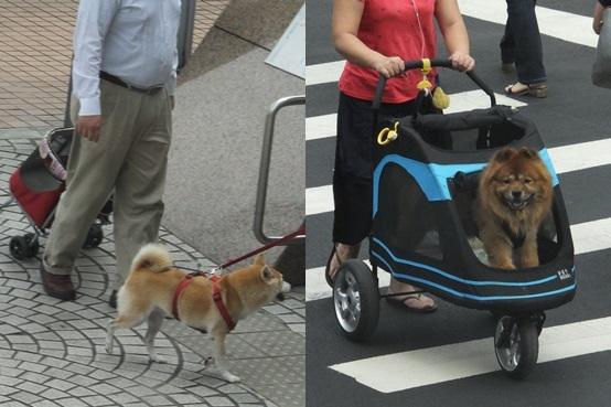 dogcart131110-horz.jpg