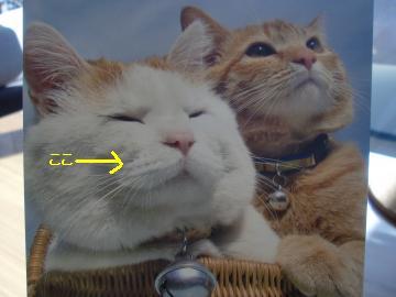 カゴ猫シロ