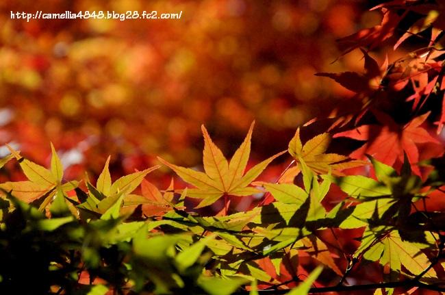 1124taimaokunoin-7.jpg