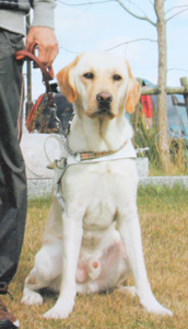 ラフコリー ミシェルのワンだふるらいふ 盲導犬アトムの失踪