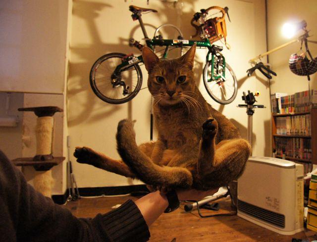 手乗り猫2