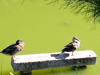 大仙公園20110915 2_350