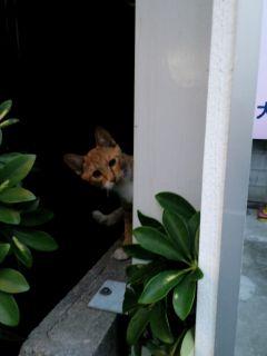 会社の猫20111019_320