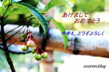 IMG_0201_1.jpg