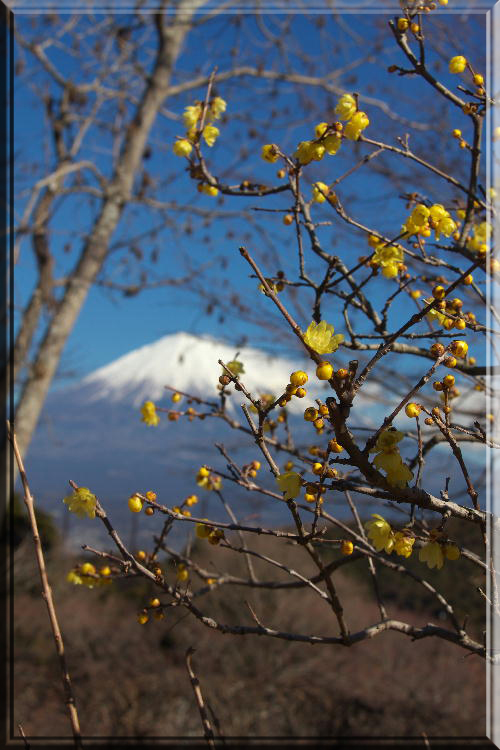 岩本山公園-2