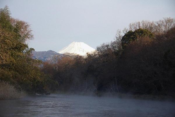 川霧柿田川-6