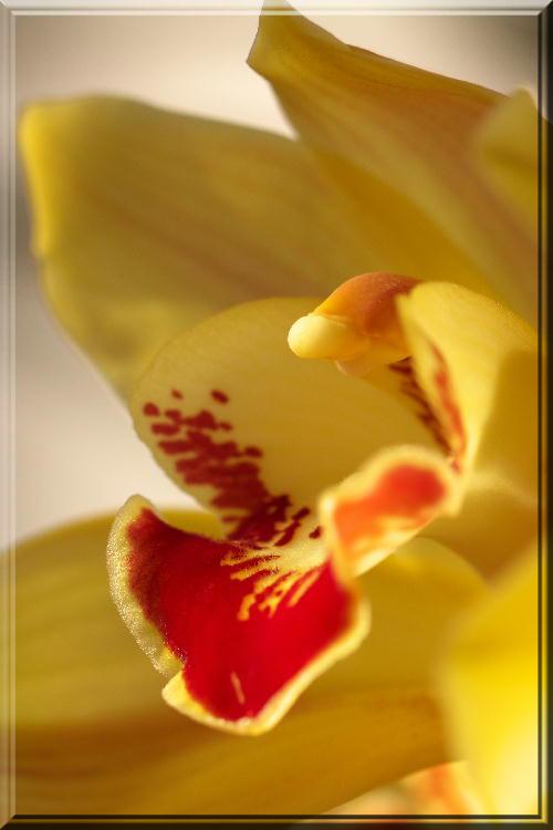 蘭黄色-1