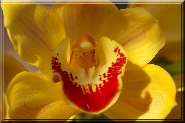 蘭黄色-2