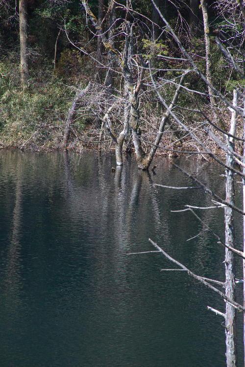 砂防ダム湖-1