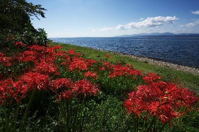 IMG_0633.jpg琵琶湖・彼岸花-633.jpg