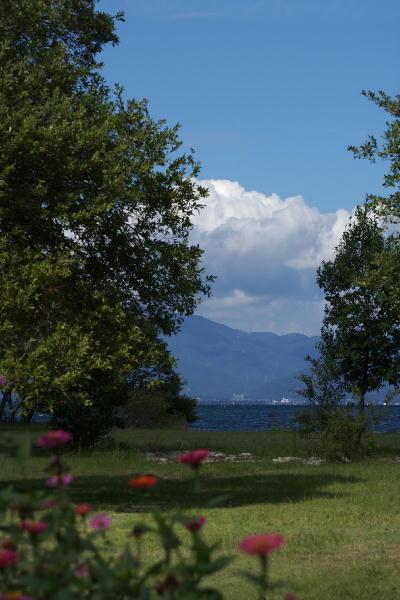 IMG_0697.jpg琵琶湖・百日草-697.jpg
