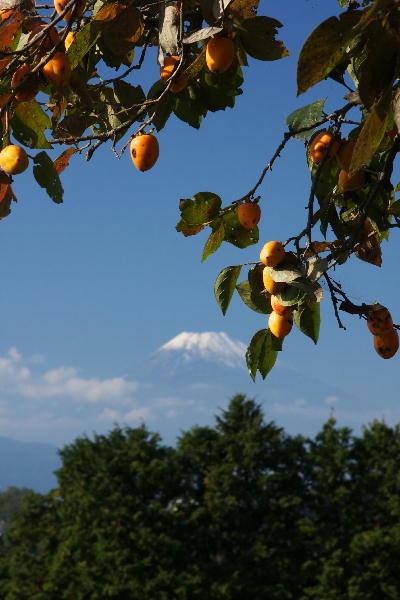 IMG_1510.jpg富士山と柿-10.jpg