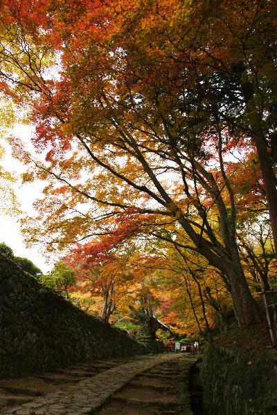 IMG_2513.jpg百済寺参道-13.jpg