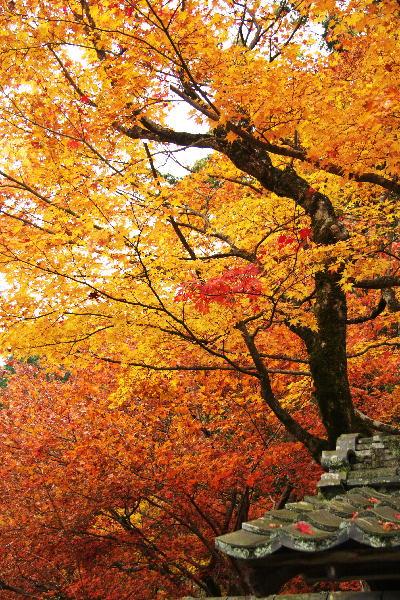 IMG_2652.jpg百済寺-52.jpg
