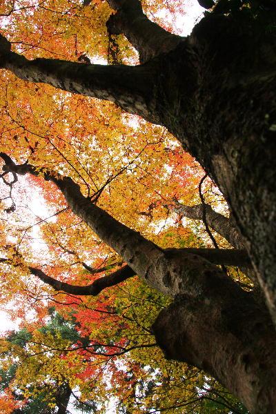 IMG_2545.jpg百済寺モミジ広角-45.jpg