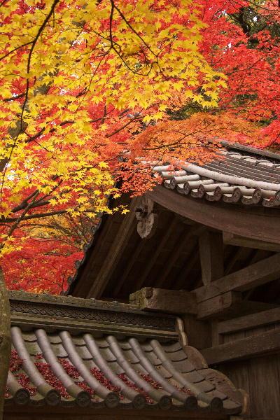 IMG_2511.jpg永源寺-山門の屋根.jpg