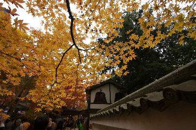 IMG_2447.jpg永源寺-黄色のモミジ.jpg