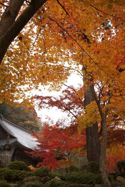 IMG_2472.jpg永源寺-本堂.jpg