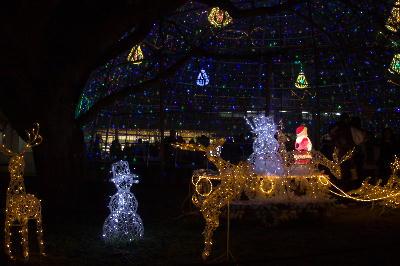 IMG_3715.jpgクリスマス-3.jpg-2.jpg