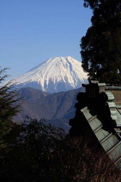 IMG_4002-お手植えの杉の間からの富士山.jpg