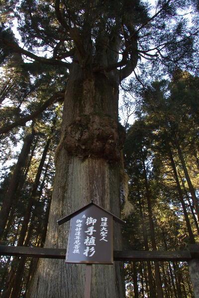 IMG_3950.jpg日蓮大聖人お手植えの杉-1.jpg