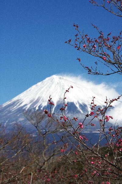 IMG_4324.jpg 岩本山紅梅-24.jpg