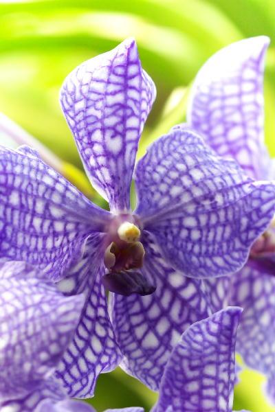 IMG_0320.jpg 蘭-紫.jpg