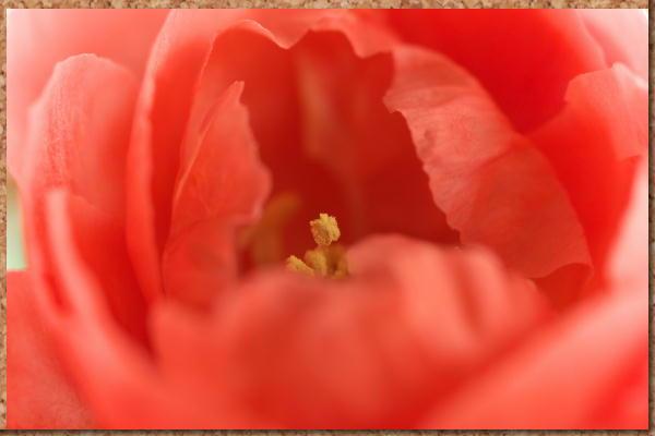 IMG_6637.jpg 37-2 赤いボケ.jpg