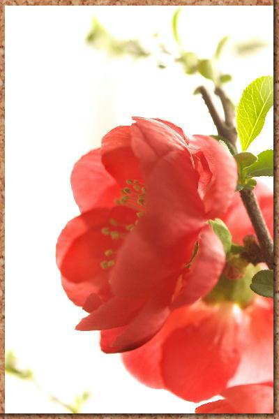 IMG_6649.jpg  49-赤いボケ.jpg