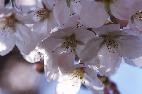 IMG_7004.jpg 04-2 桜.jpg