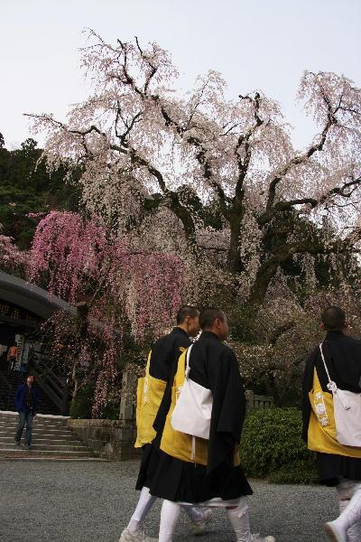 IMG_7149.jpg 49-桜と僧侶.jpg
