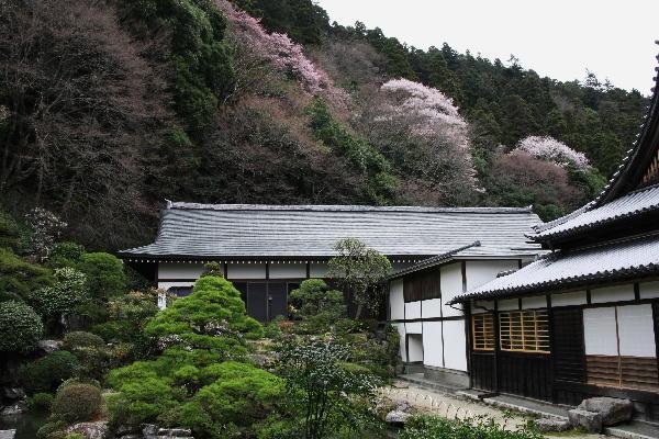 IMG_7176.jpg  76-身延の中庭.jpg
