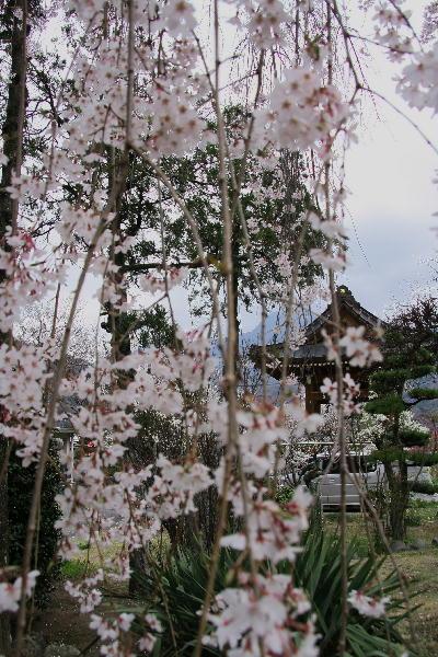 IMG_7233.jpg 33-上澤寺.jpg