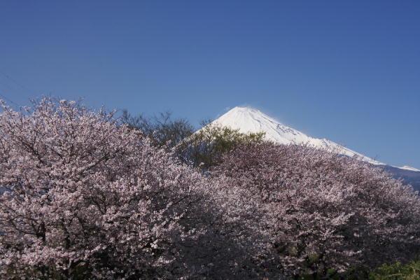 岩本山.jpg