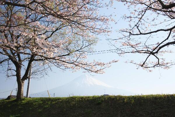 IMG_7431.jpg 春霞の桜-2.jpg