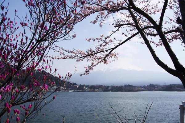 IMG_7762.jpg 62-河口湖.jpg