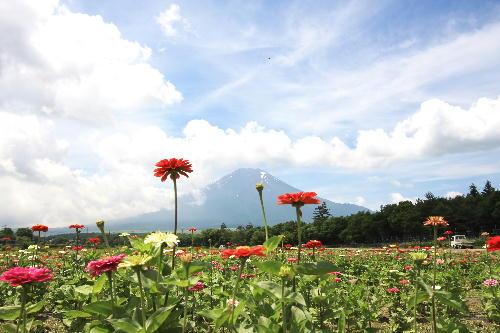 IMG_9851.jpg 山中湖-1-1.jpg