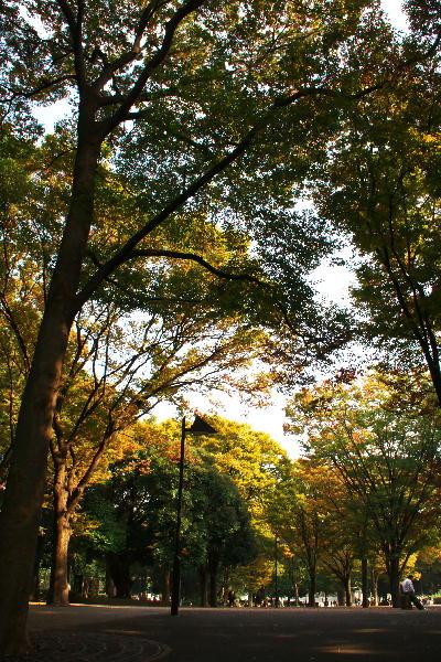 IMG_2915.jpg 上野公園の紅葉-915-222.jpg