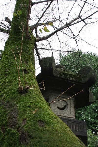 IMG_2974.jpg 灯籠と桜-974.jpg