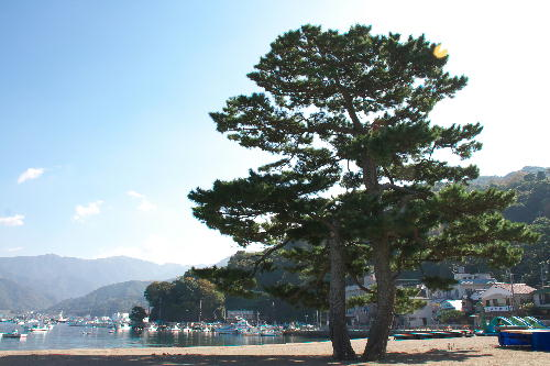 IMG_3022.jpg 御浜海岸-022-3333.jpg