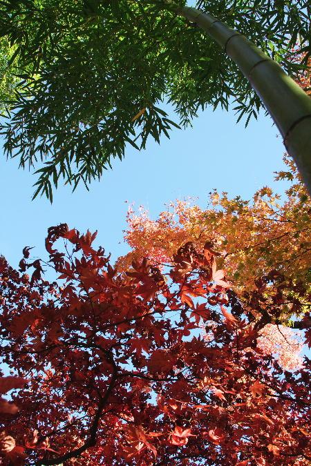 IMG_3903.jpg 庭園-903-竹-2.-3333jpg.jpg