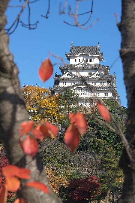 IMG_4217.jpg 桜の木とお城-217.-6666jpg.jpg