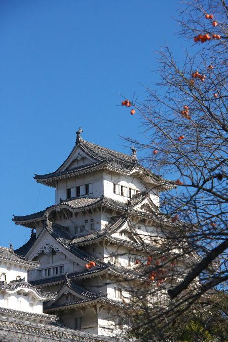 IMG_4315.jpg お城と柿-315-4444.jpg