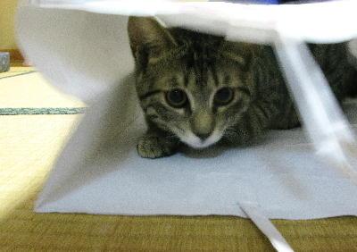 IMG_1893.jpg 猫-893-333.jpg