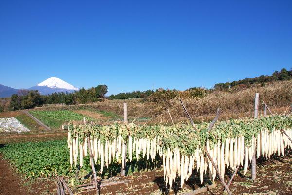 IMG_4891.jpg 大根と富士山-891-3333.jpg