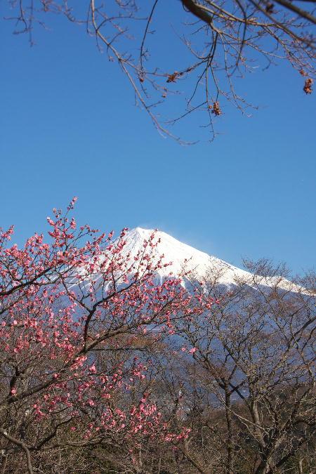 IMG_5650.jpg 岩本山公園-650.-3333jpg.jpg